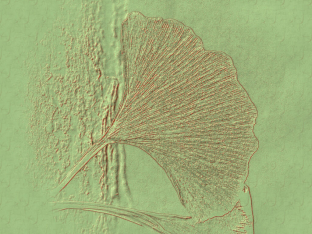 Blatt des Gingobaumes